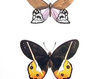 Butterflies Print  - Satyrus Butterflies - 1974 Vintage Book Page - World Butterflies Book - 10 x 8