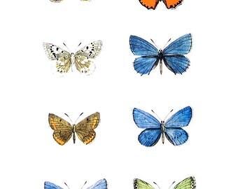 Butterflies Print  - Polyommate Butterflies - 1974 Vintage Book Page - World Butterflies Book - 10 x 8