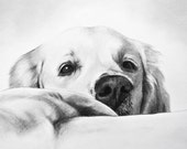 Dog portraits - commission a portrait from your favorite photograph
