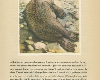 Vintage French Seal Print, 1944/19 Wild Animals, French Text Page, Anton Trieb, Nursery Art, Nature Art, Nature Wall Art, Nature Watercolor