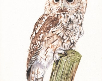 Tawny owl Print of watercolour painting A3 size largest print - TO4815, bird art, wall art, home decor
