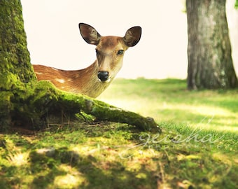 deer photograph nature photography woodland creature fairytale animal green