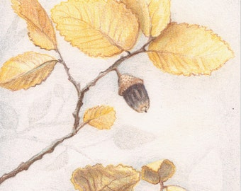 "Original Colored Pencil Drawing - Fall Wall Art - Autumn Harvest Home Decor - 4"" x 6"""