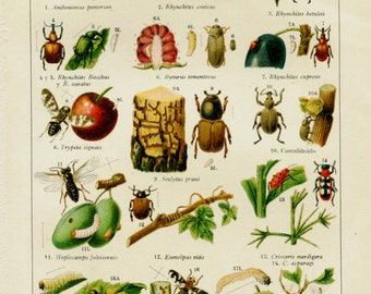 1923 Garden Insect Pests Color Lithograph Identification
