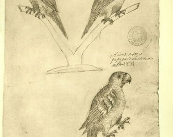 Vintage Birds Print,  Sketch Drawing by Frei Cristovao de Lisboa, Birds of Brazil, Maranhao