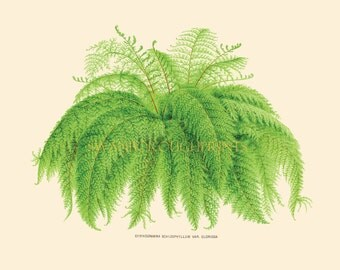 Fine Art Print of a Garden Fern. House Plants with Lush Green Leaves. Tropical Palm Trees and Ferns. Living Room Fern Decor Quick Makeover