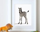 Zebra art print, zebra nursery artwork, baby jungle animal print, safari childrens ilustration - nursery art