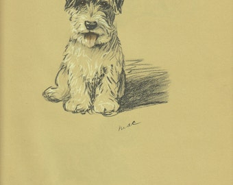 TERRIER Dog Print, 1930s  Lucy Dawson Dogs, Wall Art, Puppy PRint, Antique print, Wall Decor, Animal PRint, Art Illustration, book page, B-1