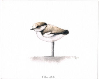 Little-ringed Plover's Chick Original Watercolour Illustration