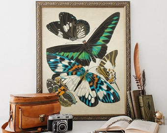 Antique Botanical Print Wall Art Print Butterflies Insects Giclee Vintage Home Decor Natural History Print Art Decorative Reproduction BF006