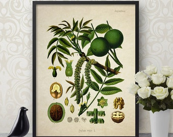 Vintage Botanical Print English Walnut Giclee Home Decor Antique Natural History Walnut Art Flower Decorative Reproduction VF006
