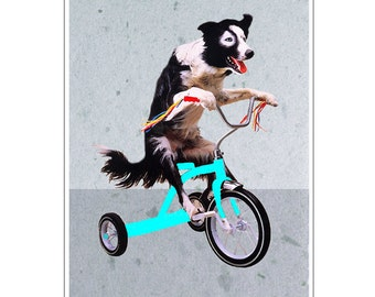 Border Collie on bicycle, Print Illustration Art Poster Acrylic Painting Kids Decor Drawing Gift, border collie print,border collie painting