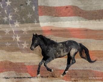 Freedom Run ~ Wild Mustang ~ Wild Horses ~ Utah ~ Equine Art