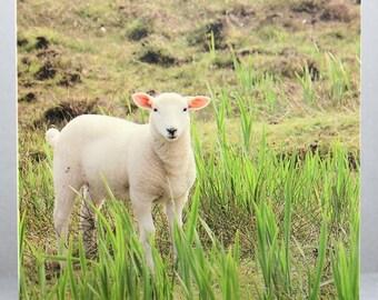 Curious Lamb - Photo Card