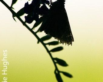 Insect Silhouette - Original Fine Art Photograph - Moth