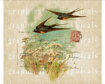 Swallows Daisies Carte Postale Instant Digital download graphic image for Iron on fabric transfer burlap paper pillows cards No. 601