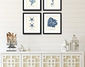 Nautical Octopus Amp Haeckel Wall Art Prints Amp By