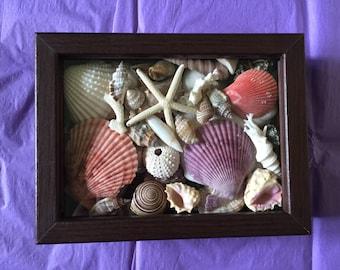 Sea Shell Shadow Box, Nautical Decor, Beach Decor, Home Decor, Coastal Decor, Star Fish, Shell Art