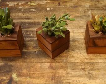 Reclaimed Modern Succulent Holder- Reclaimed Cedar & Walnut- Set of Three