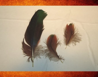 BIG SALE Exotic Feathers - Set of 3 Brown, Red, and Green Parrot Feathers. 3-6 inch long.  Naturally molted and cruelty-free.  FEA-159