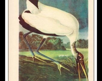 Vintage Book Print 1950's Audubon Bird Of America : Weed Ibis Single Page Wall Art Decor Print