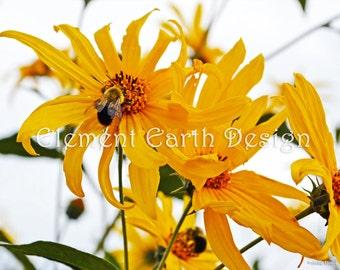 Bee on Flower, Instant Download, 14x11, Digital Printable, Fine Art Digital Photo, Photography, flower photo