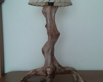Lamp with root of Sabina
