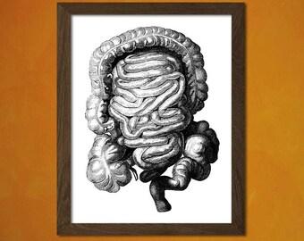 Get 1 Free Print *_* Anatomy Poster - Scientific Illustration Medical Decor Human Anatomical Wall Decor Home Design Bones Medicine Intestins