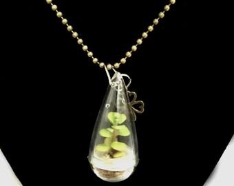 Live Succulent Necklace / Wearable Live Plant / Terrarium Necklace / Miniature Terrarium / Tiny Wearable Terrarium Accessories