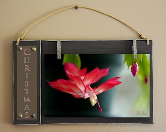 Horizontal Image Board Christmas Cactus