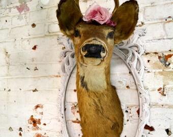 Painted Cottage Prairie Real Taxidermy Deer PR132