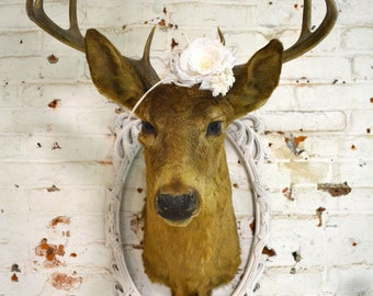Painted Cottage Prairie Real Taxidermy Deer PR133
