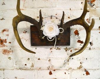 Painted Cottage Prairie Real Taxidermy Deer PR135