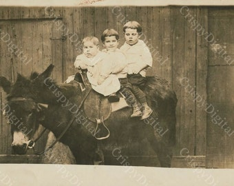 Little Boys w/Bowl Haircuts on a Donkey Vintage Postcard Printable Digital Download