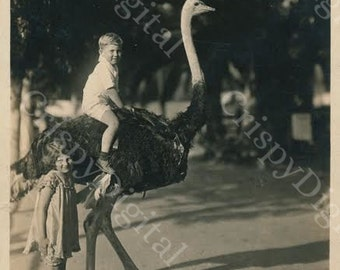 Vintage Ostrich Photo with Boy Printable Antique Postcard Digital Download