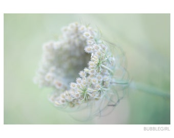 Nature Photography PRINT, Circle of Lace, Queen Anne's Lace, Fine Art Photography, Fine Art Print, Wall Art