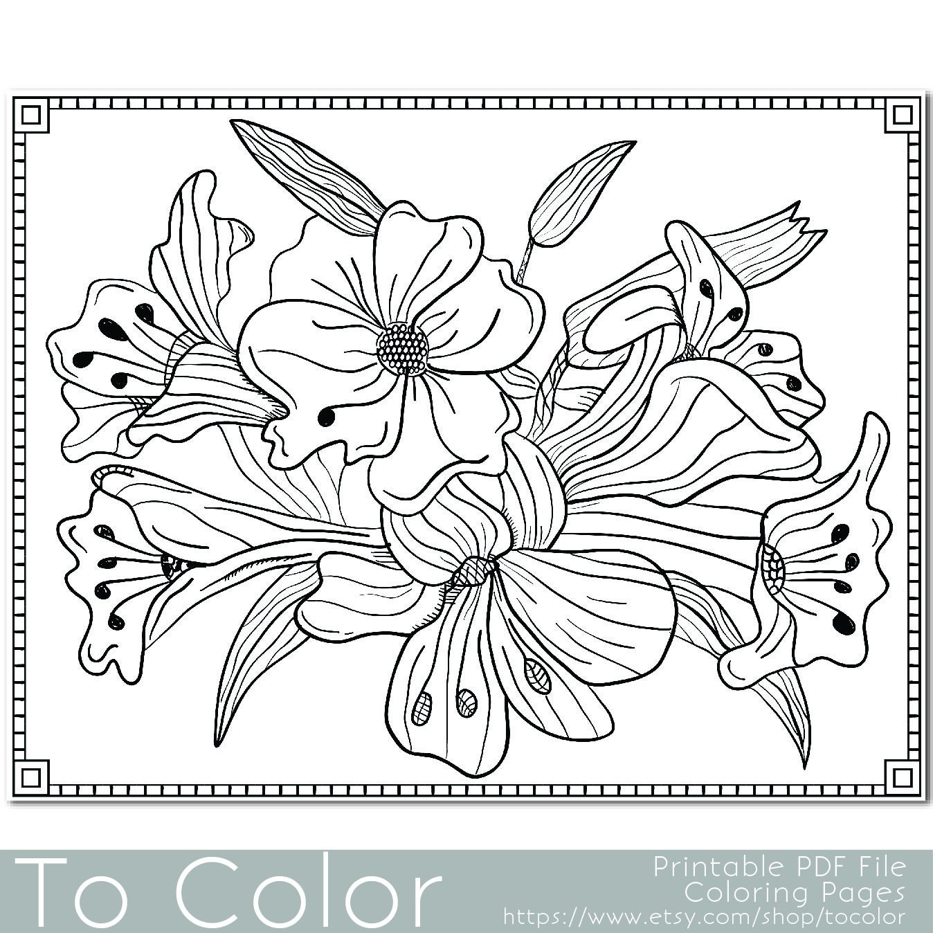 Flower Coloring Pages Pdf : Flower lilies floral coloring page for adults pdf jpg