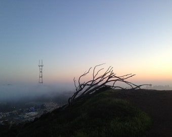 sutro tower and that SF tree - photograph - print - San Francisco