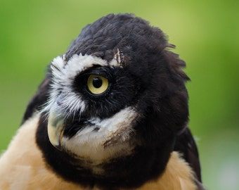 Owl Color Photo Print