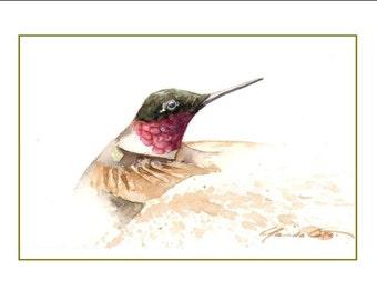 No. 40, Colibri 2