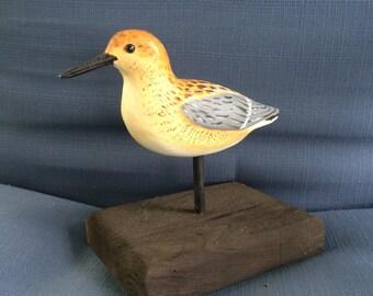 Yellow Legged Sandpiper Shorebird