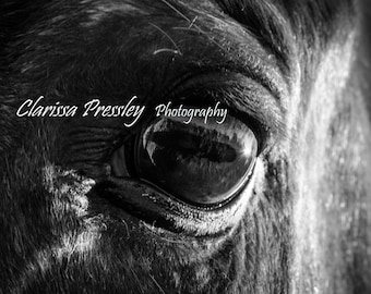Horse photography, Black and white photography, Fine art, Wall art, Horse art
