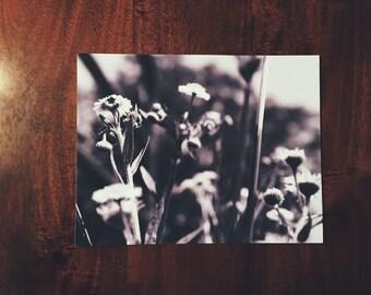Black and white nature photographs