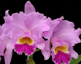 Orchids - Three different varieties, three different flower color combinations