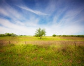 Texas Landscape Photography, Lone Tree, Nature, Green Landscape, Texas Hill Country, Tree Photo, Texas Photography, Texas Blue Skies, Texan