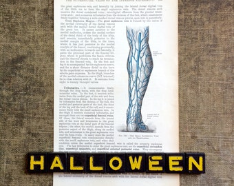Anatomical Print - Veins System of the Leg