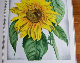 Art Book Botanical Color Prints Hans Schwarzenbach Institute Berne Switzerland 1950