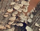 mushroom art, rustic photo, rustic art, rustic decor, brown decor, nature art, fungi photo, fall art, autumn art, mushroom print, fungi art