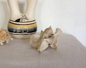 Vintage Animal Bone, Skull, Vertebrae, Neck bone,