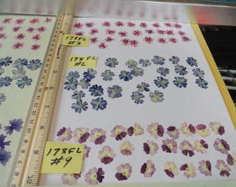 Choose your Verbena Flowers Grown, Pressed and Preserved in Alaska 178 FL